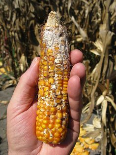 """This links to the GreenMedInfo article: """"Mycotoxins: The Hidden Hormone Danger In Our Food Supply."""""""