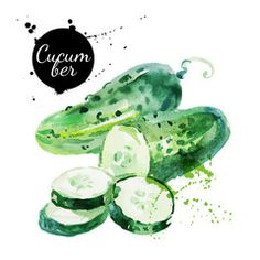 Green cucumber Hand drawn watercolor painting vector image on VectorStock Watercolor Fruit, Watercolor Sketch, Watercolor Illustration, Watercolor Paintings, Site Bio, Vegetable Painting, Photo Images, Images Photos, Food Painting