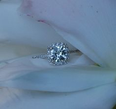 first choice for my engagement ring- diamond surrounded by mini diamonds in a halo cushion cut.   not too square, but not too round shape. the sparklier, the better