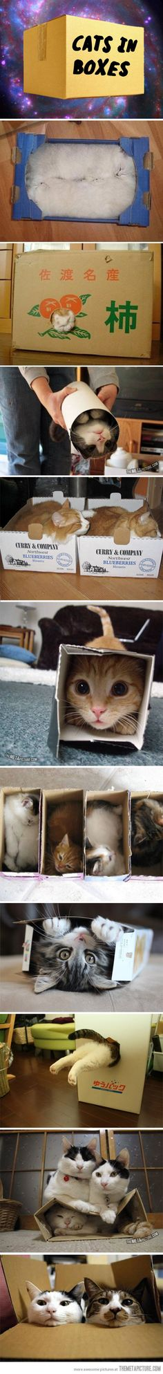 I like cats in boxes!