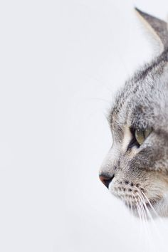 Tabby Cat Side View