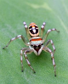 .Well, this spider may be pretty but I would still scream like a sissy if I ever came across one.  ~PeggyS.