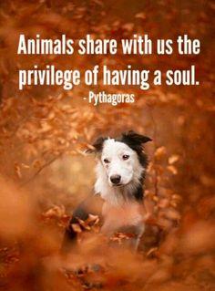 Los animales comparten con nosotros el privilegio de tener un alma - Pitágoras