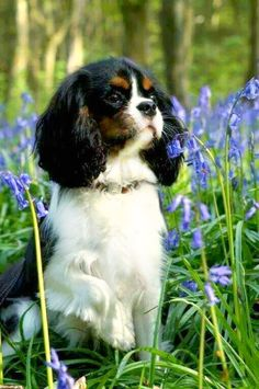 Puppy in Bluebell Woods.