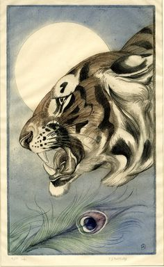 Head of tiger, with peacock feather. Edward Julius Detmold, 1924- Colour etching and aquatint
