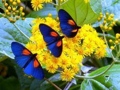 beautiful Butterflies - Pixdaus
