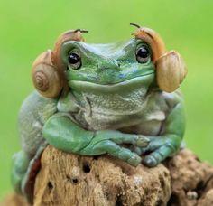 Frog earrings?
