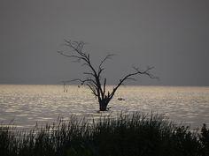 Soledades. El Lago de Valencia tiene sus fantasmas en Maracay.