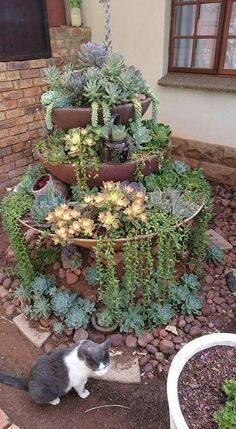 new garden for succulents. Old fountain, new garden for succulents. Old fountain, new garden for succulents.Old fountain, new garden for succulents. Old fountain, new garden for succulents. Garden Yard Ideas, Succulent Garden Landscape, Plants, Succulents, Backyard Garden, Country Garden Decor, Rock Garden Landscaping, Succulent Landscaping, French Country Garden Decor