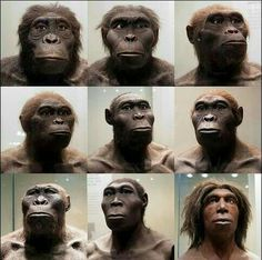 Early Humans, First Humans, Human Evolution Tree, Human Family Tree, Forensic Facial Reconstruction, Homo Habilis, Historia Natural, Anthropologie, Empire Romain