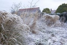 Tom Stuart-Smith Hertfordshire garden; Gardenista. Lovely winterscape provided by resting grasses.