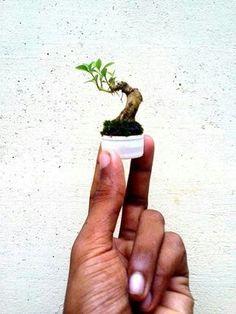 Micro bonsai in a bottle cap