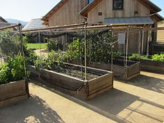 """More ideas for raised vegetable garden beds: protect from hungry pests by enclosing with sports netting that can rigged to raise or lower like a shade, or parted like a curtain. This may be a good idea to put on the back burner """"just in case"""". Garden Troughs, Fenced Vegetable Garden, Raised Vegetable Gardens, Vegetable Garden Planning, Garden Fencing, Herb Garden, Raised Bed Garden Design, Backyard Garden Design, Garden Landscaping"""