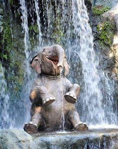 An elephant who survived poachers enjoys his waterfall and life...