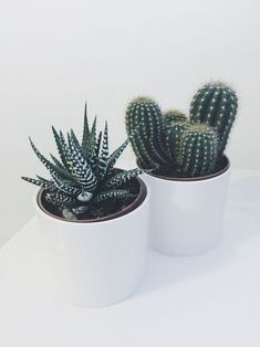 ideas for the indoor and outdoor Cactus Garden No. 66 - Succulents Great ideas for the indoor and outdoor Cactus Garden No. 66 - Succulents -Great ideas for the indoor and outdoor Cactus Garden No. Outdoor Cactus Garden, Indoor Cactus Plants, Green Plants, Indoor Garden, Cactus Planters, Potted Plants, Cactus Cactus, Cactus Decor, Indoor Outdoor