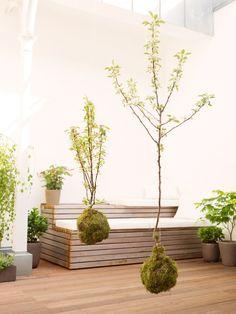 h ngende zimmerpflanzen bilder von anreizenden blumenampeln pflanzen garten pinterest. Black Bedroom Furniture Sets. Home Design Ideas