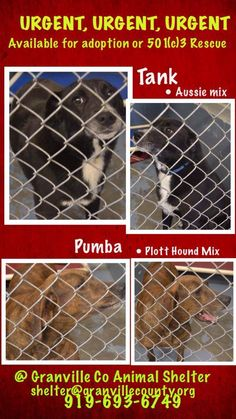 lizardmarsh: Oxford NC: Dogs ((URGENT - GASSING SHELTER))  (Granville Co.)! Very small rural shelter! PLS CLICK ON PHOTO TO SEE MORE DOGS IN DANGER OF A SLOW CRUEL BARBARIC TORTUROUS DEATH!!! PLS SHARE & help SAVE these dogs! Lots of volunteer support!