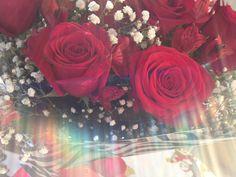 Red roses june