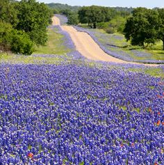 America's Best Spring Drives | Texas Hill Country