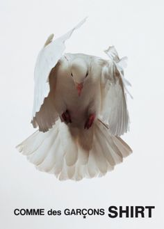 Interesting ads from Comme des Garcons Matou, Photo D Art, White Doves, Comme Des Garcons, Fauna, Photos, Pictures, Photographs, Bird Feathers