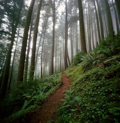 to wander in the world by manyfires (Danielle Hughson), via Flickr. » http://www.flickr.com/photos/manyfires