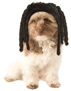 Rubies Costume Dreadlocks Dog Wig -- Read more reviews of the product by visiting the link on the image.