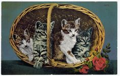 Antique Old Real Photo Cat Postcard Kittens [100609] - $5.69 : www.oldpostcardsintime.com , Online source for old and antique postcards