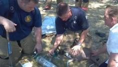 Using Pet Oxygen Masks Kansas Firefighters Resuscitate Dog
