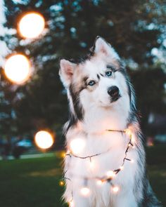 Festivals and dogs