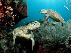 Beautiful Underwater World-AmO Images-
