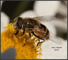 fly4 | Flickr - Photo Sharing!