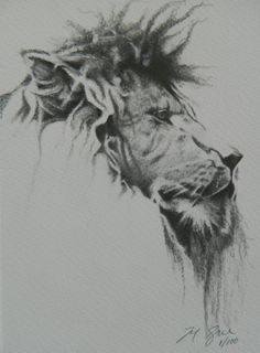 Male Lion profile  from the Buffalo Zoo by TyboogyArtworks on Etsy, $25.00