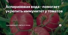 А вы не знали, что при помощи самого обычного аптечного аспирина можно укрепить иммунитет у всех пасленовых культур ( томаты, перцы, картофель, баклажаны). Да, да аспирин помогает не только людям. А вот, как его применять для растений я сегодня вам расскажу. Пару лет назад мои помидорчики заболели фитофторозом. Боролась я за урожай разными способами, однако спасла только часть. И как всем известно