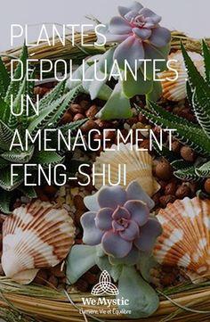 Plants depolluting: one - Deco Garden-Design Plantes Feng Shui, Feng Shui Plants, Feng Shui Garden, Feng Shui Principles, Feng Shui Tips, Dry Plants, Fake Plants, Jardin Feng Shui, Blue Wallpapers
