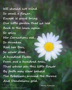 Scent of Wildflowers 2-Fine Art Photography by EDMPoetryPhotography- | Erica Massaro | Wildflower Photo | Emily Dickinson Poem | Poetry | White | Green | Spring | Summer | Etsy | Garden | Flora | Flowers | Nature | Beauty | Seasonal |