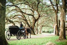 A fairy tale experience. #wedding #carriage #OakTrees #Floirida #GrandOaksResort Laurie Wilson Photography
