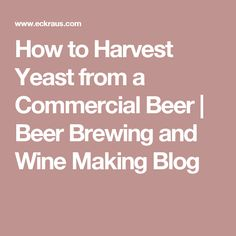 How to Harvest Yeast from a Commercial Beer | Beer Brewing and Wine Making Blog