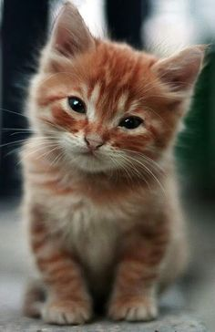 Cat of the Day ♥
