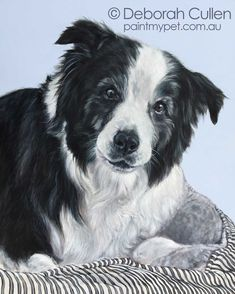 Toby - Border Collie Dog Portrait Painting - paintmypet by Deborah Cullen White Border Collie, Collie Dog, Love And Respect, Dog Portraits, My Animal, Wood Paneling, Faith, Black And White, Pets