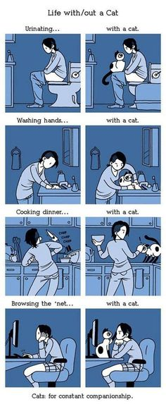 Life would be boring without a cat.