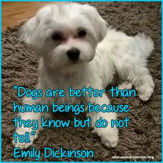 Maltese dogs quotes so true, cute and funny! The dog quotes to make you smile and to appreciate the fur babies we have in our life. Teacup Maltese, Maltese Dogs, Chihuahua Dogs, You Smile, Cute Funny Animals, Funny Dogs, Funny Kittens, Adorable Kittens, Puppies And Kitties