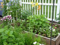 Plant a Winter Edible Garden with Help from Tara Kolla of Silver Lake Farms   In-Ground Gardens   Home & Garden   KCET