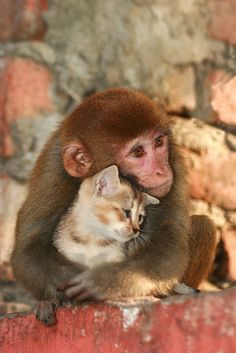 Wild | A monkey sharing her love with a kitten in Nagaon, As… | Flickr - Photo Sharing!