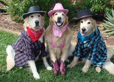 Texas Rangers Bentley, Brie and Tyler