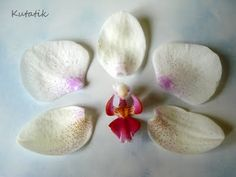 Orchid flower made of polymer clay without the use of Malden - Fair Masters