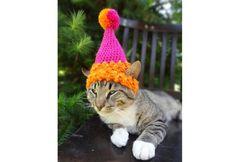 Mundo pet: artesã cria gorros pra gatos que vão aquecer o seu coração