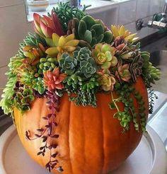 Succulents in pumpkin