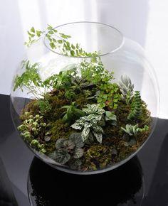 grow little terrarium