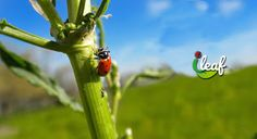 Bugging Out: How to Use Beneficial Insects in Your Garden ~ Green Home Library Bug Control, Pest Control, Plant Pests, Plants, Beneficial Insects, Passionate People, Being Used, Bugs, Fur Babies