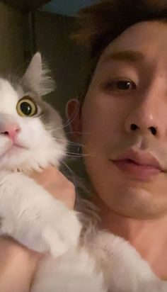 Kittens, Cats, Ig Story, Hip Hop, Coding, Kpop, Photo And Video, Animals, Instagram